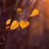 Amber Autumn Light