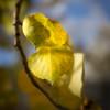 The Three Leaves
