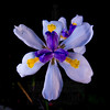 Flower with dark background.
