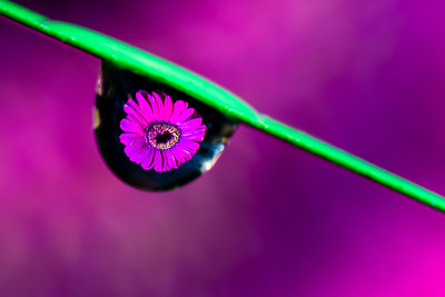 Water Drop Refractions