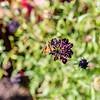 Moth Feeding