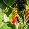 Red & Yellow Tropical Flowers