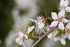 Blossom_insects05_mg_1529