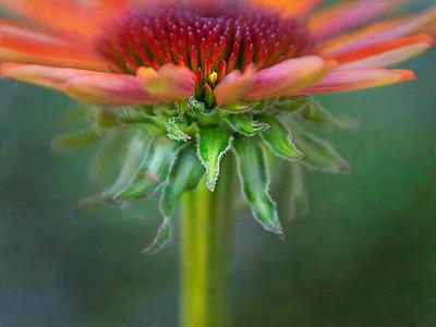 inflorescent subterfuge