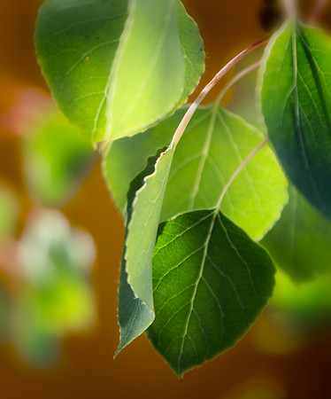 Green Leaf Poem