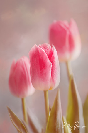 Group of Tulips