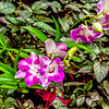 Epiphyte Orchids