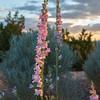 Santa Fe Sunset 1
