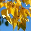 Fall color way towards Aspen - Colorado, Denver - USA