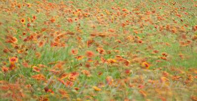 Firewheels