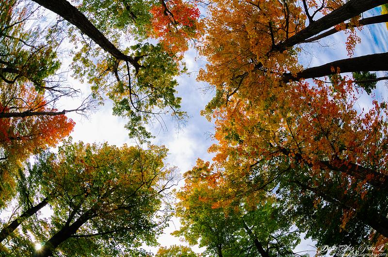 Fall Color @ Niagara State Park - Buffalo,New York, USA