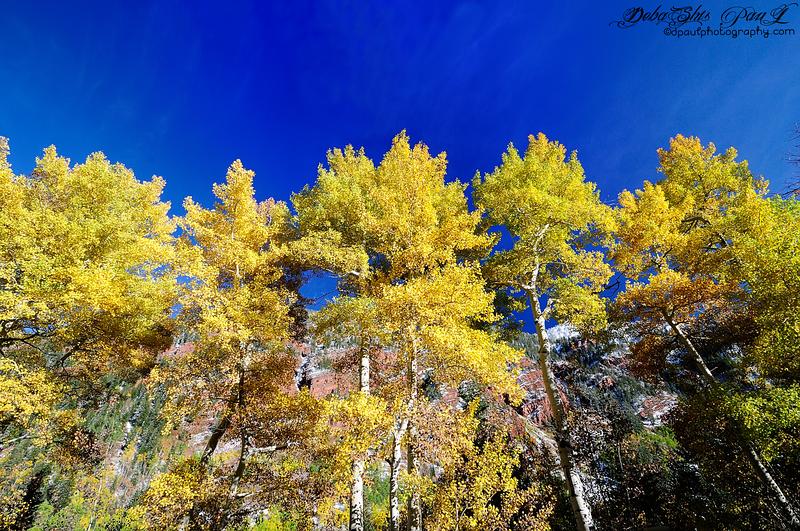 Aspen beauty - Colorado , USA
