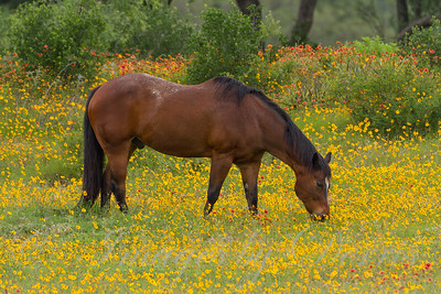 Grazing in the wildflowers