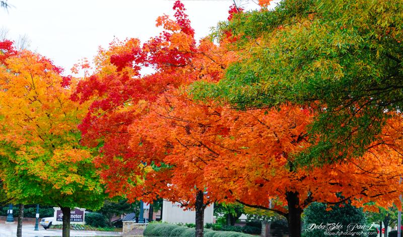 Fall color in Dunwoody - Atlanta, Georgia - USA