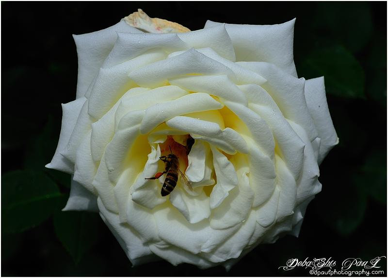 Rosengarten (The Rose Garden) - Bern, Switzerland