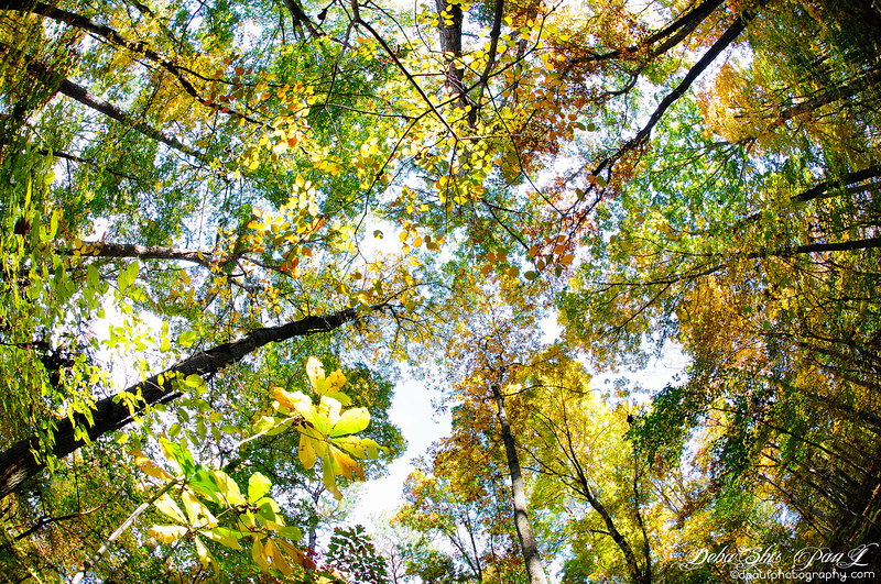Fall color across White water creek hiking trail of Chattahoochee - Atlanta, Georgia - USA