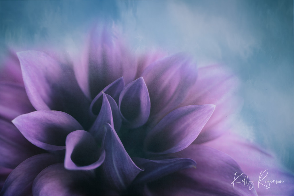 Dahlia In The Blue