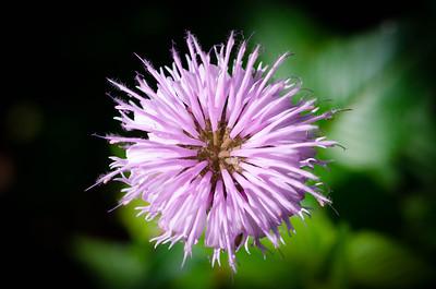 Wildflower - Flat Rock Park - Englewood, new Jersey