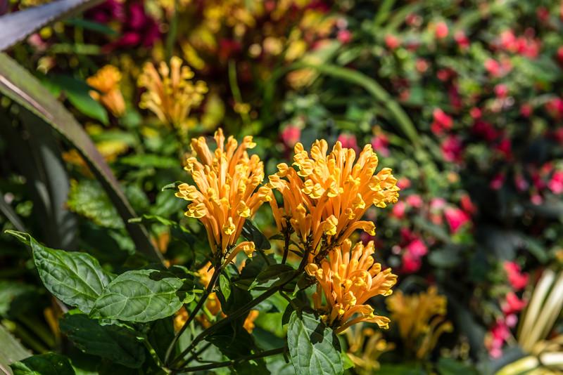 Yellow Bouvardia Ternifolia Flower