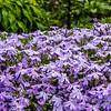 """""""Emerald Cushion Blue"""" Flowers"""