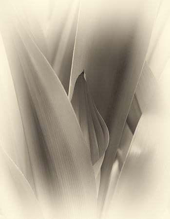 Leaf Sonata