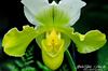 Orchid @ Atlanta Botanical Garden - Atlanta, Georgia - USA