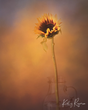 Flowers absolutely brighten a room, bring a smile, and make a otherwise dull day, bright again. Sunflower in painted light.