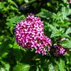 Azora Flower Pod