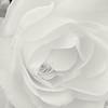 Folds of White