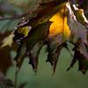 Autumn Leaves VI