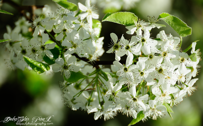 Spring refreshers with full bloom glory ... @ Smyrna , Georgia - USA
