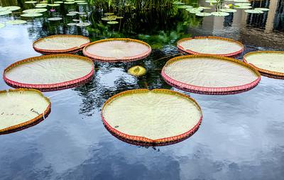 Water Platters, Longwood Gardens 03