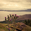 Scottish Thistle, Old Man of Storr, View on to the Sound of Raasay and  Raasay