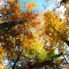 Fall color in AMLI at Northwinds apartment community