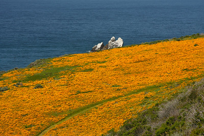 Poppies, Cental Coast CA.
