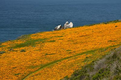 Poppies, Cental Coast CA.