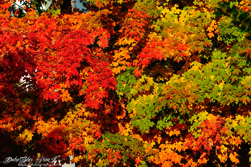 Fall color in Dunwoody - Atlanta, Georgia - USA