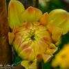 @ Jardin Botanique(Botanical Garden) , Geneva,Switzerland