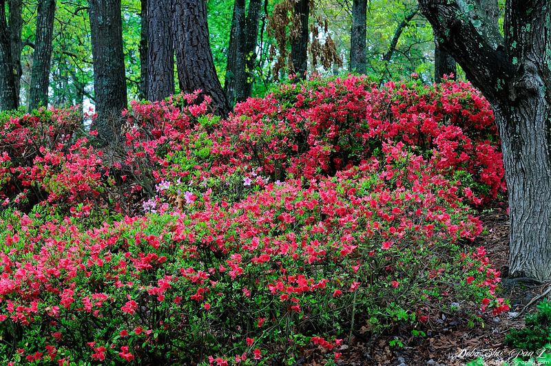 Break of Spring - Smyrna, Georgia - USA