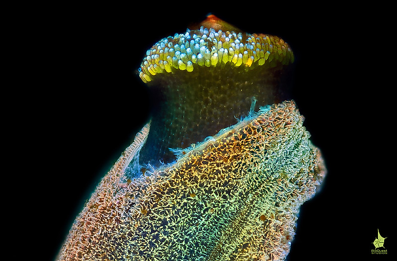 "<p align=""left"">An unidentified plant seed under UV light. The object is stained with various fluorescent dyes each targetting a different structure. Single nuclei are visible in the seedling </p><br>The image got a honorable mention in Olympus Bioscapes 2011 photomicrography <a href=""http://www.olympusbioscapes.com/gallery/photographer/daniel-stoupin"">contest</a>.<p></p>"