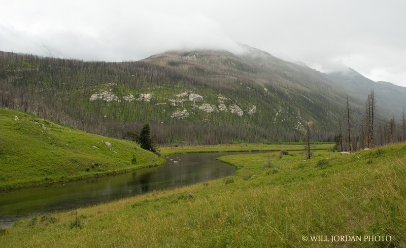 Montana meadow stream wilderness