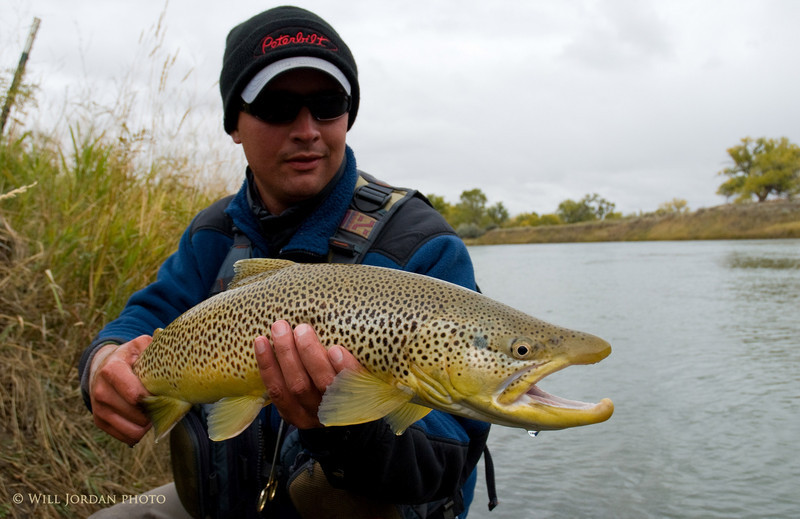 Montana Fall Streamer Fishing Grip and Grin Brown Trout