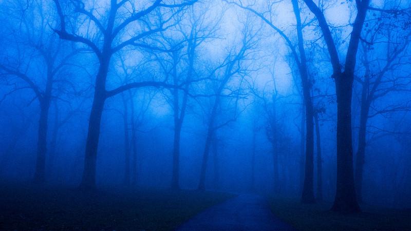 Morning Fog, Dellwood Park, Lockport, Illinois