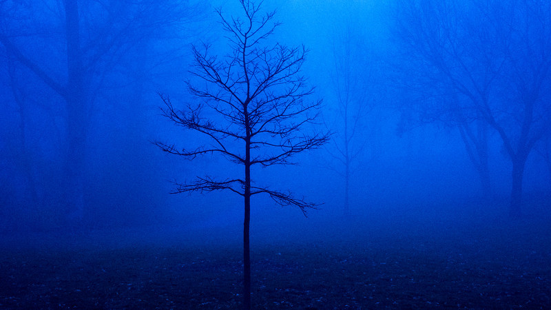 Bare tree in morning fog