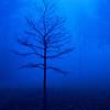 Bare tree in morning fog