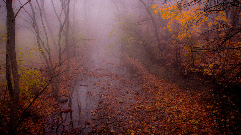 Morning Fog, Dellwood Park, Lockport, Illinois