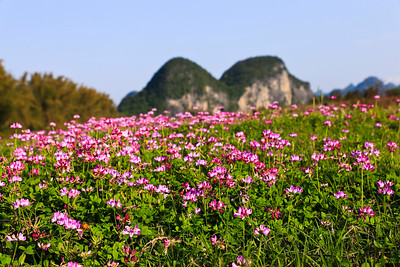 Rural scenery in Yangshuo