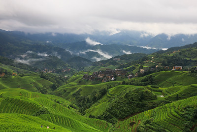 Rice terrace landscape in summer