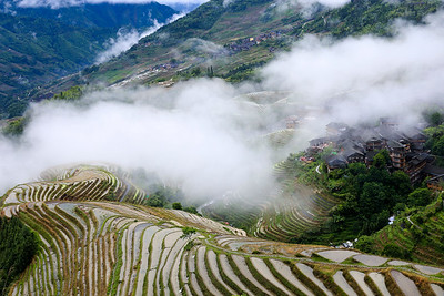 Misty rice terraces