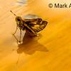 Wet Moth